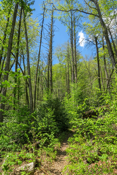 Squirrel Gap Trail -- 2,600'