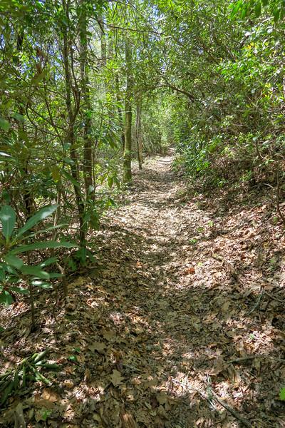 Squirrel Gap Trail -- 2,750'
