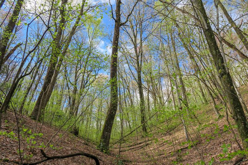 Squirrel Gap Trail -- 3,020'