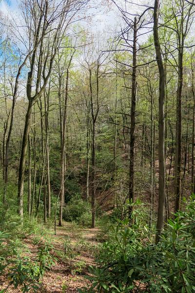 Squirrel Gap Trail -- 3,000'