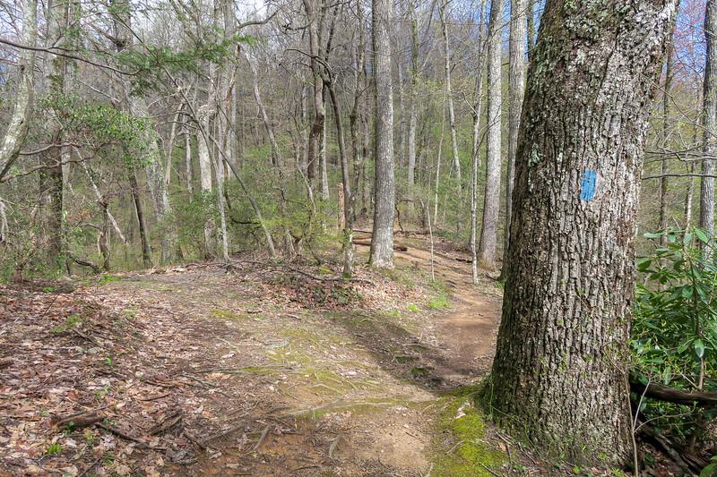 Squirrel Gap Trail @ Laurel Gap -- 3,500'