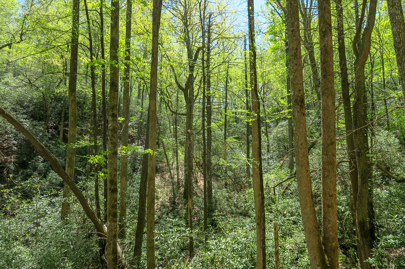 Squirrel Gap Trail -- 2,630'