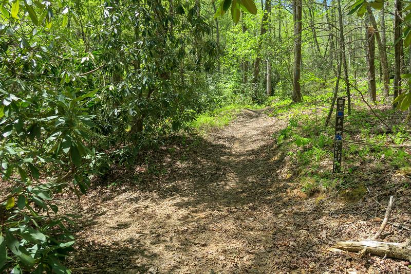 Squirrel Gap/Bradley Creek Trail Junction -- 2,560'