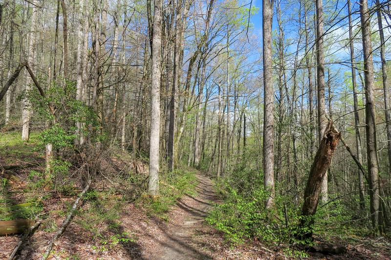 Squirrel Gap Trail @ Mullinax Gap -- 2,980'
