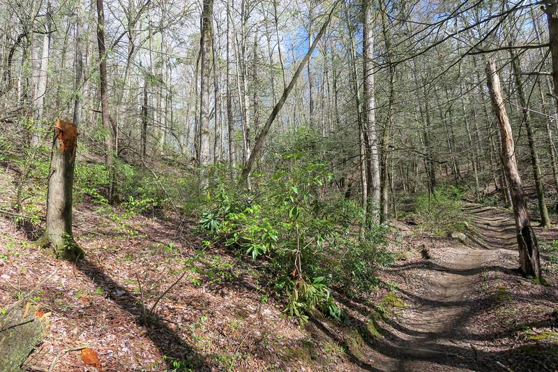 Squirrel Gap Trail -- 2,950'