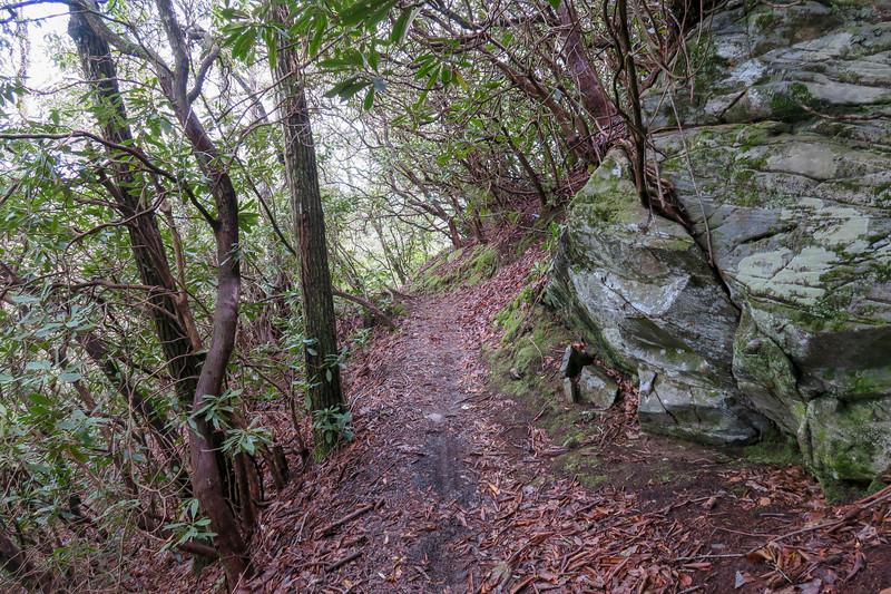 Squirrel Gap Trail -- 3,240'