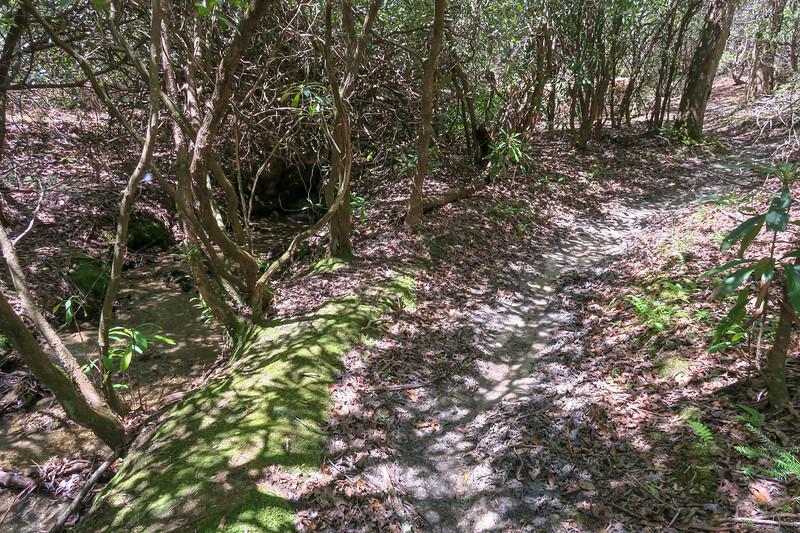 Squirrel Gap Trail -- 2,800'