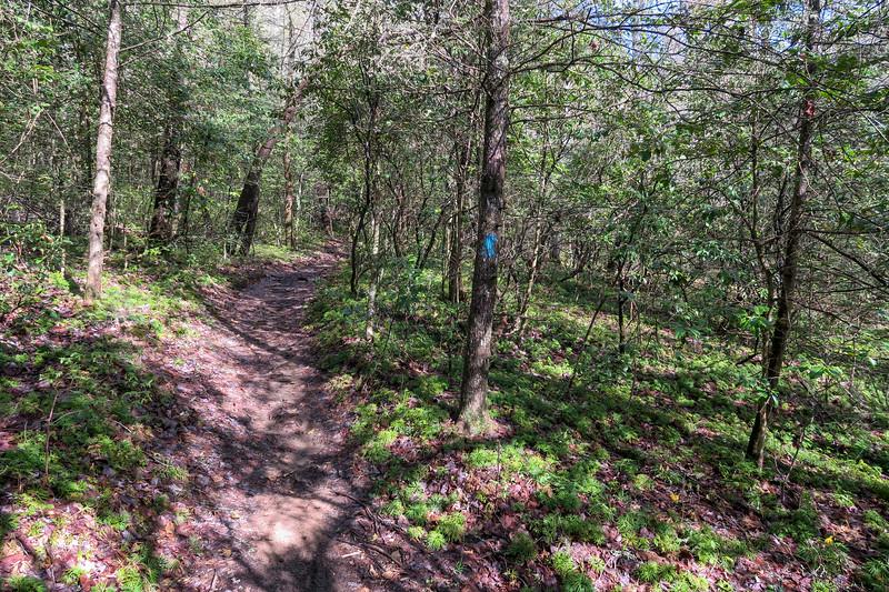 Squirrel Gap Trail -- 2,900'
