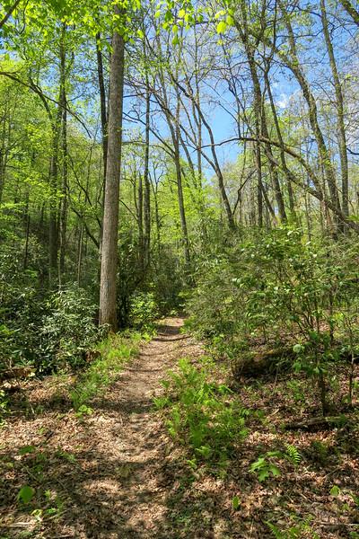 Squirrel Gap Trail -- 2,580'