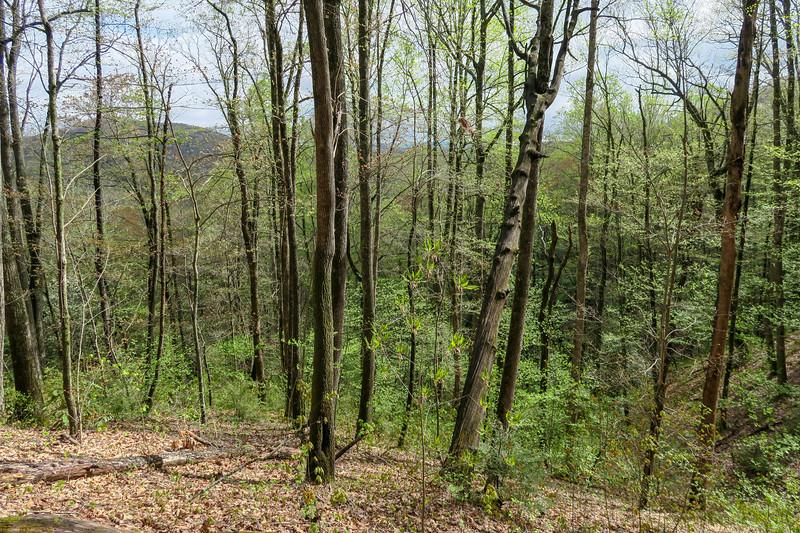 Squirrel Gap Trail -- 3,030'