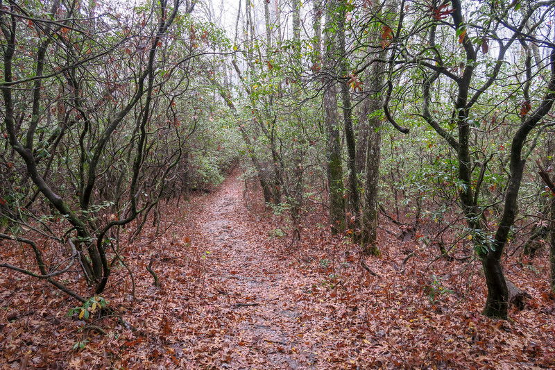 Sunwall Trail -- 3,150'