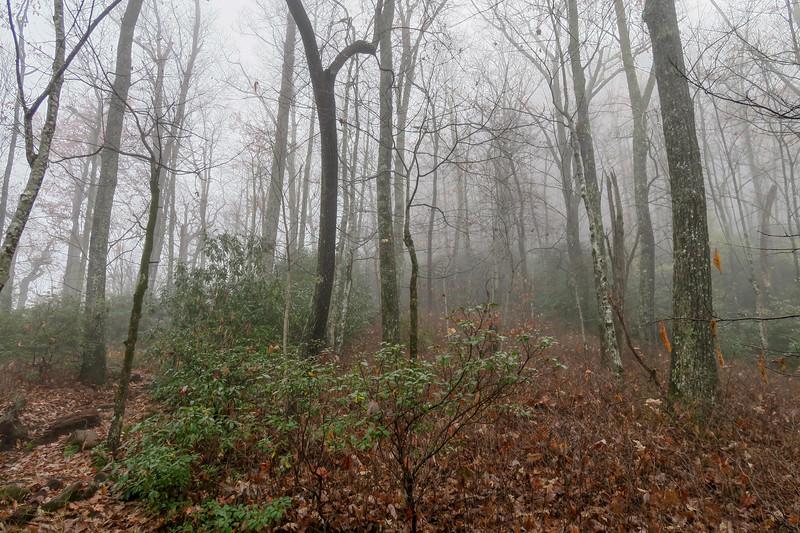 Sunwall Trail -- 3,400'