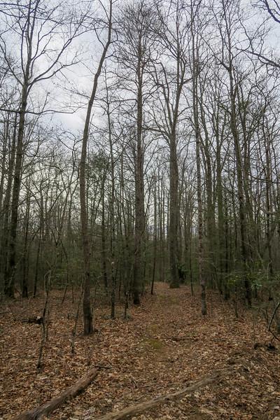 Thompson Creek Trail -- 3,450'