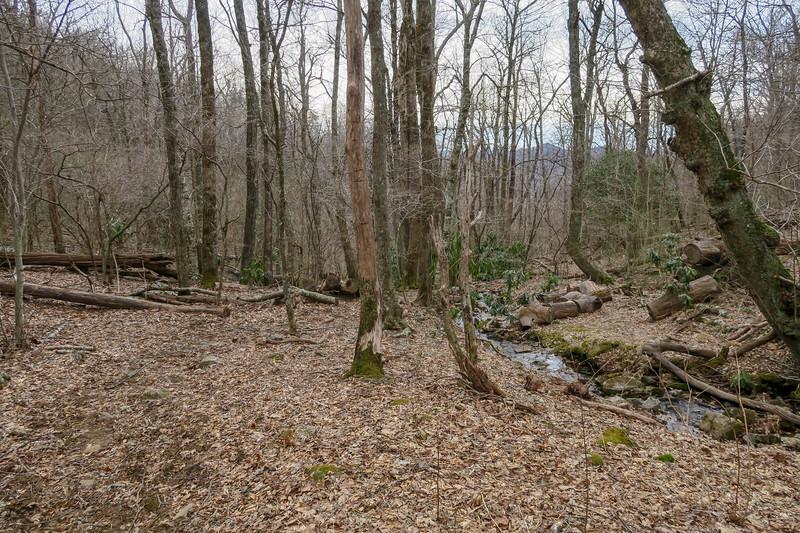 Thompson Creek Trail -- 4,200'