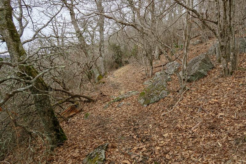 Thompson Creek Trail -- 4,920'