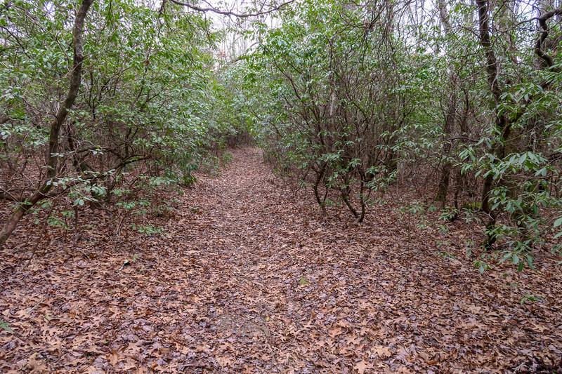 Thompson Creek Trail -- 3,350'
