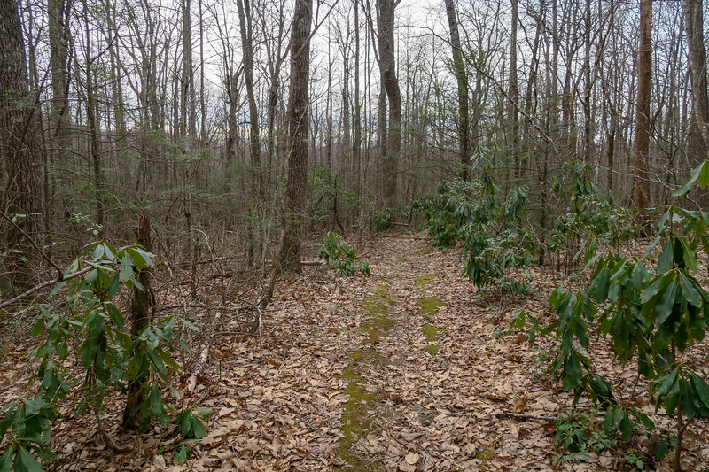 Thompson Creek Trail -- 3,500'
