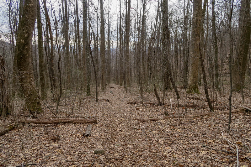 Thompson Creek Trail -- 3,700'
