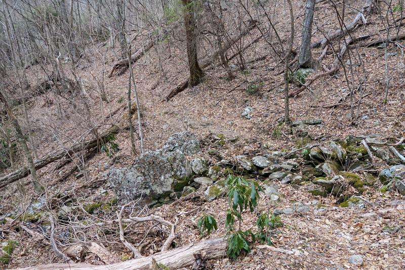 Thompson Creek Trail -- 4,350'