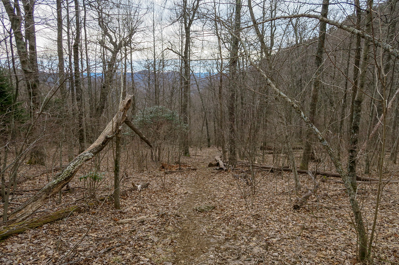 Thompson Creek Trail -- 4,280'