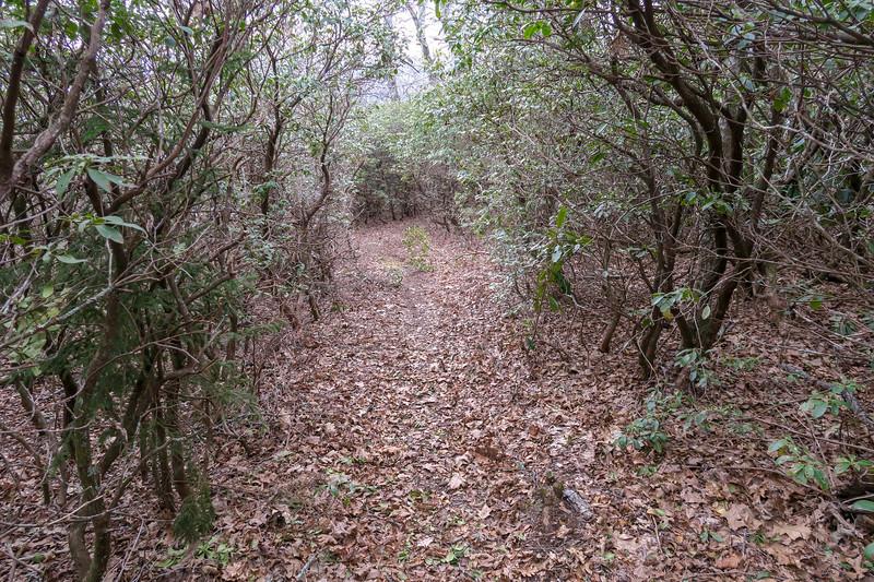 Thompson Creek Trail -- 4,840'