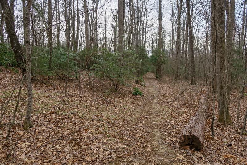 Thompson Creek Trail -- 3,400'
