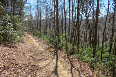 Thrift Cove Trail -- 2,600'