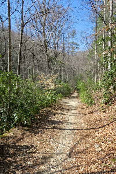 Thrift Cove Trail -- 2,240'