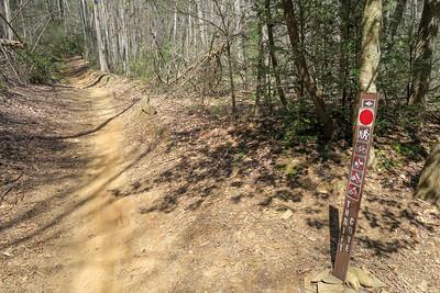 Thrift Cove/Black Mountain Trail Upper Junction -- 2,830'