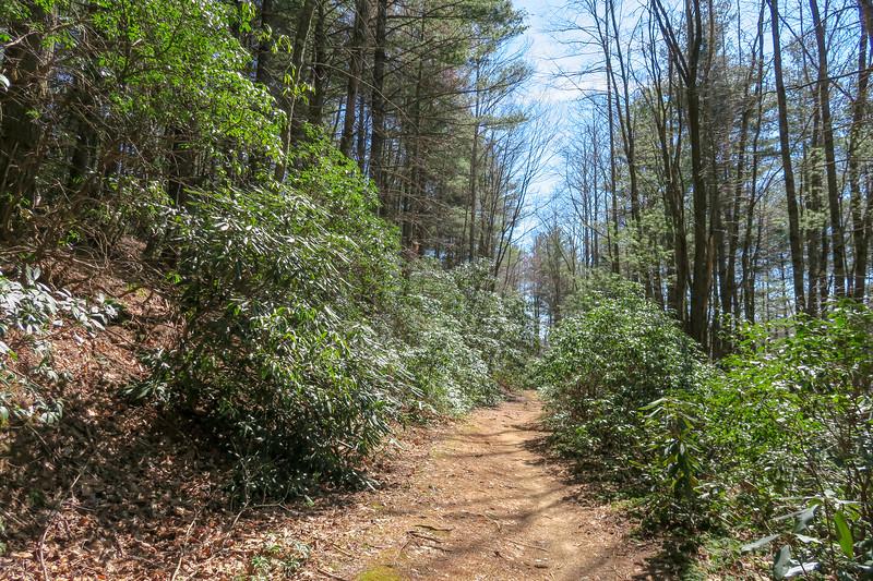Thrift Cove Trail -- 2,850'