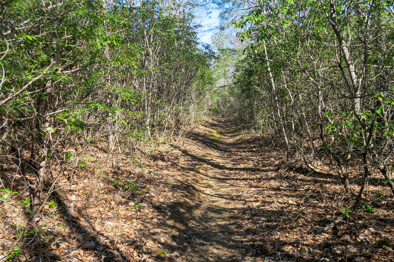 Trace Ridge Trail -- 3,150'