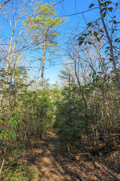 Trace Ridge Trail -- 2,880'