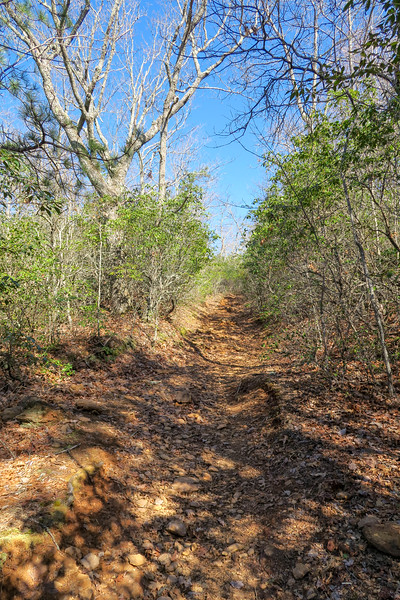 Trace Ridge Trail -- 3,050'