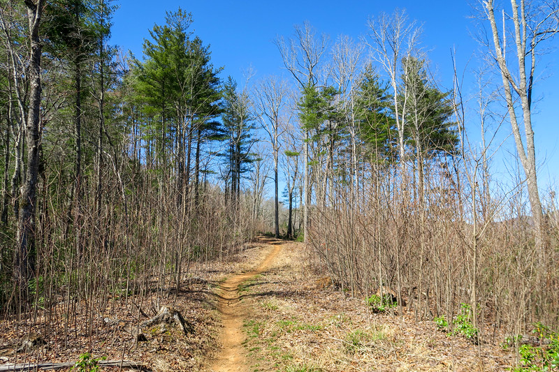 Trace Ridge Trail -- 2,550'
