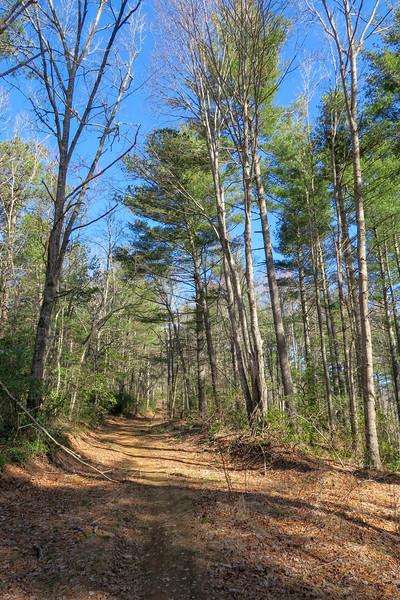Trace Ridge Trail -- 2,600'