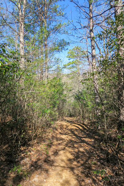 Trace Ridge Trail -- 3,170'