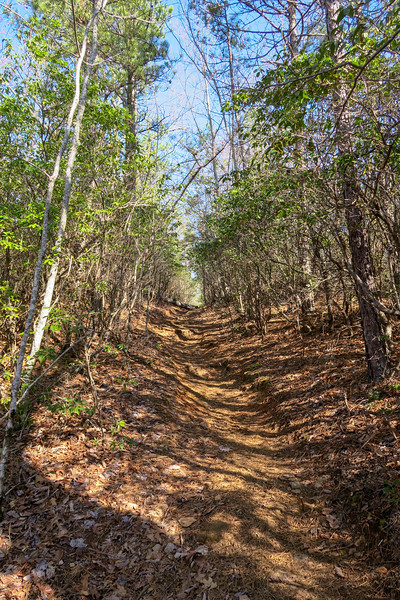 Trace Ridge Trail -- 3,100'