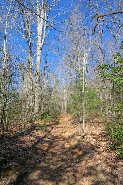 Trace Ridge Trail -- 2,860'