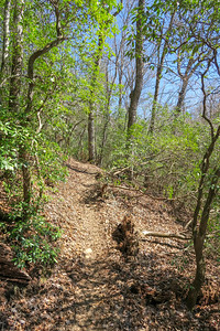Trace Ridge Trail -- 2,320'