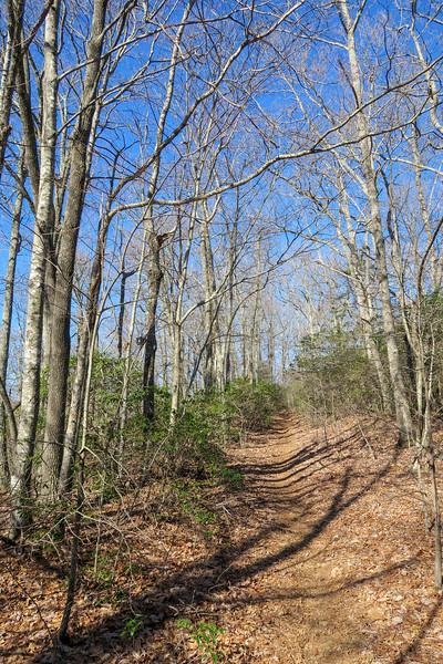 Trace Ridge Trail -- 2,950'