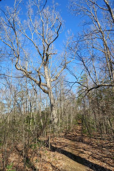 Trace Ridge Trail -- 3,000'