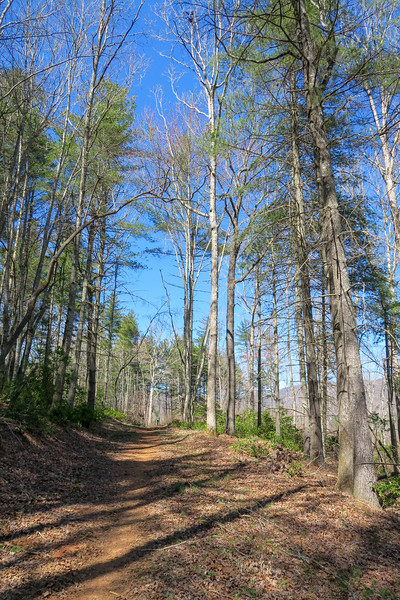 Trace Ridge Trail -- 2,560'