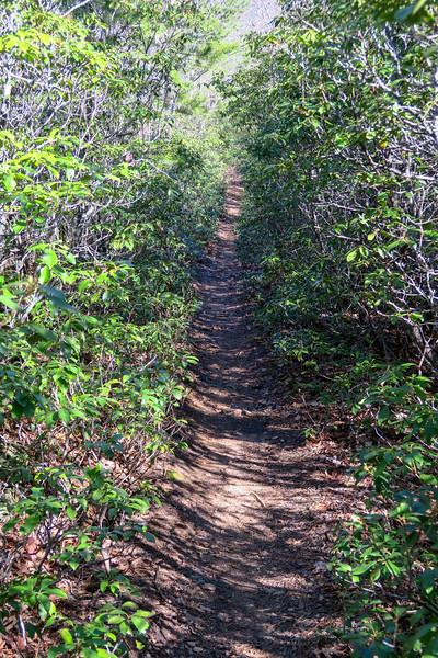 Trace Ridge Trail -- 3,020'