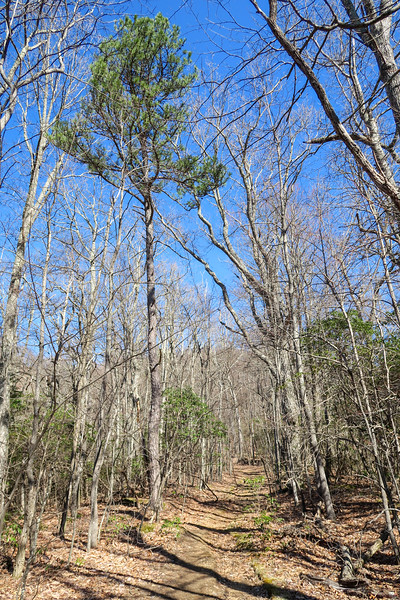 Trace Ridge Trail -- 3,420'
