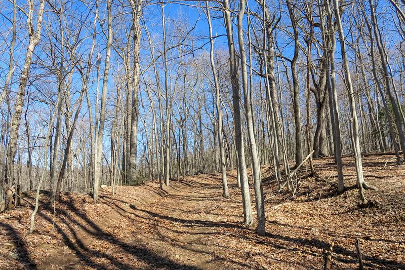 Trace Ridge Trail -- 3,320'
