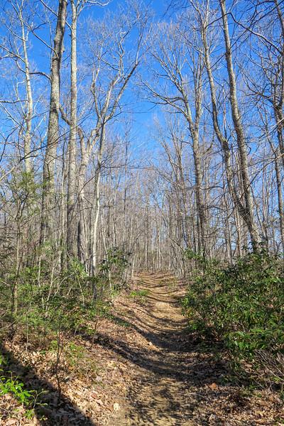 Trace Ridge Trail -- 3,350'