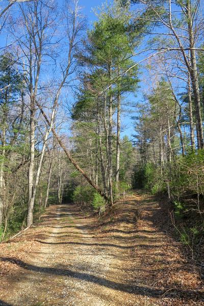 Trace Ridge Trail (F.R. 5097/F.R. 5097A Split) -- 2,570'