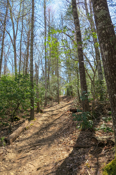 Trace Ridge Trail -- 2,450'