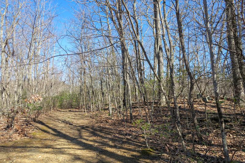 Trace Ridge Trail -- 3,500'