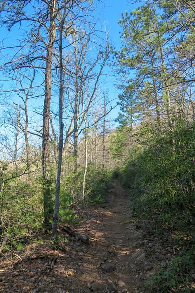 Trace Ridge Trail -- 2,800'
